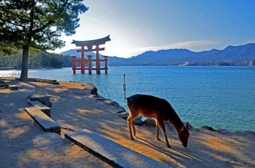 02-广岛-严岛神社的鹿