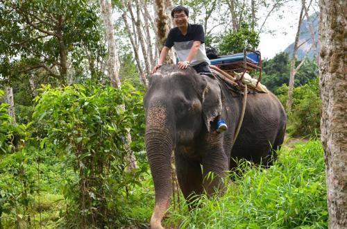 4-甲米-元旦骑大象