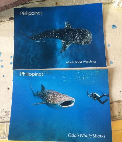 01-鲸鲨